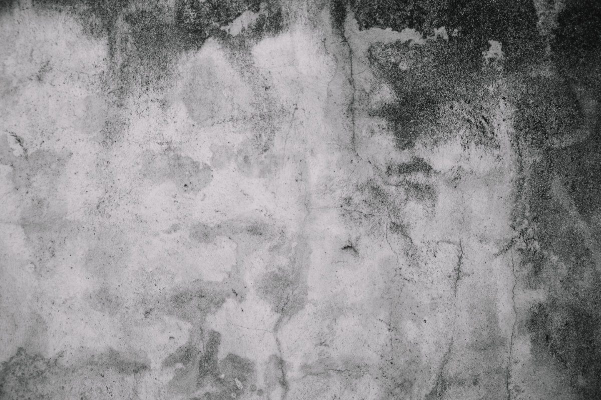 The Causes Of Mould And Why Your Mould Needs To Be Addressed